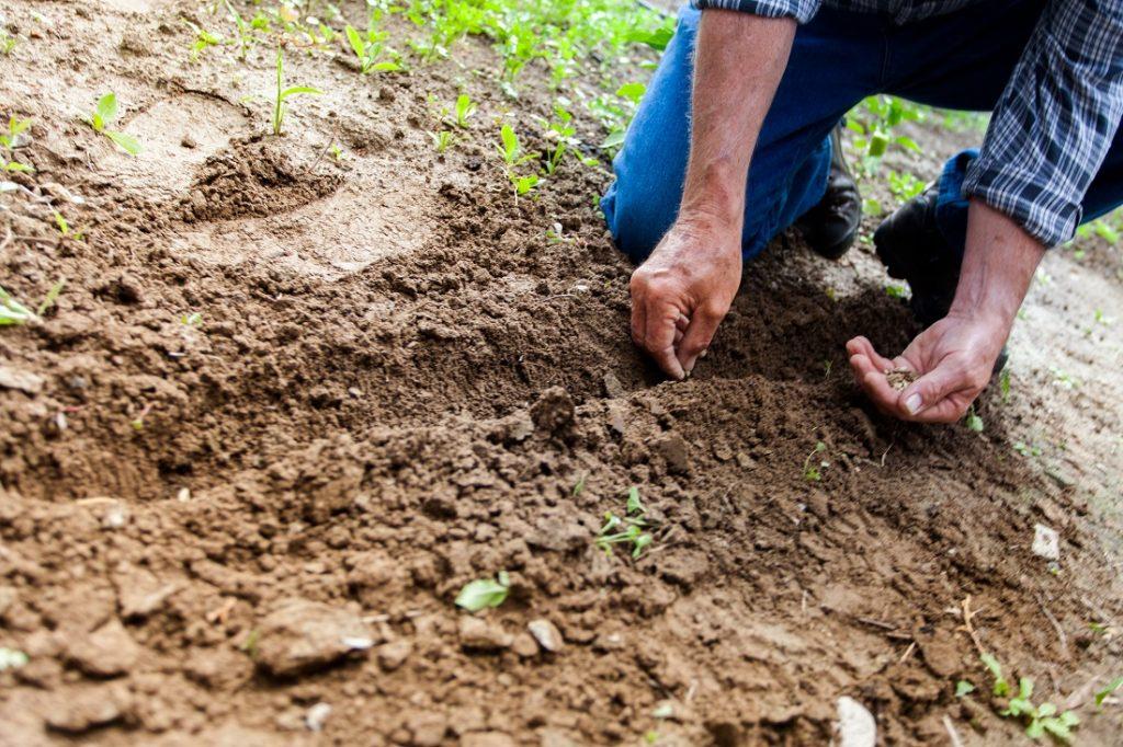 Les principaux avantages de l'engrais naturel