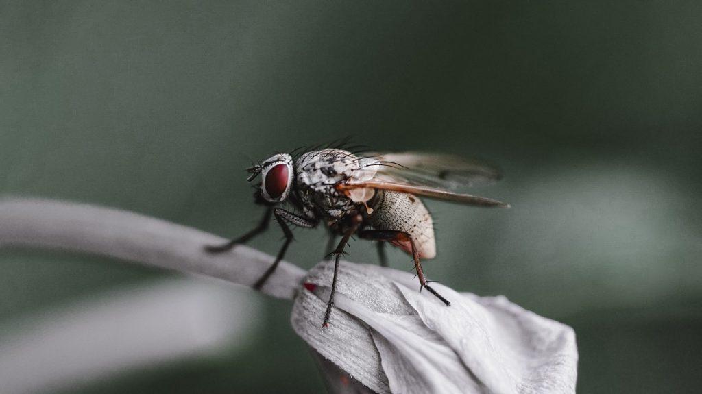 Piège à mouche naturel, comment en fabriquer ?